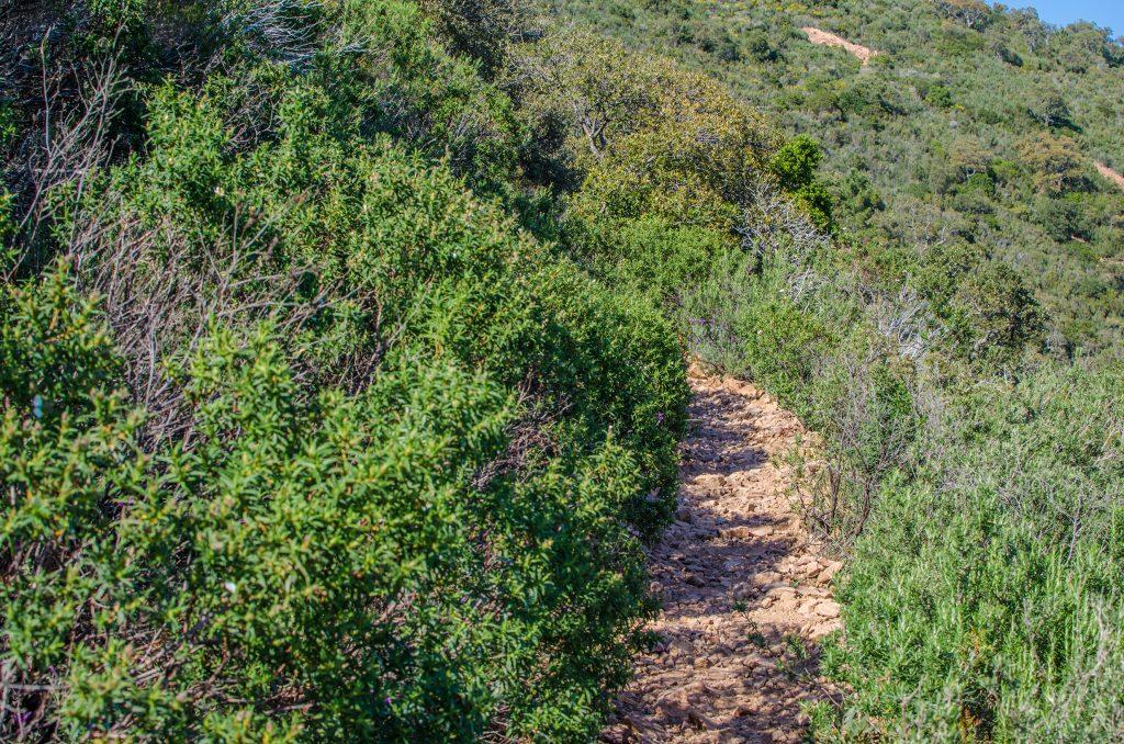 Chemin de la randonnée du cap roux