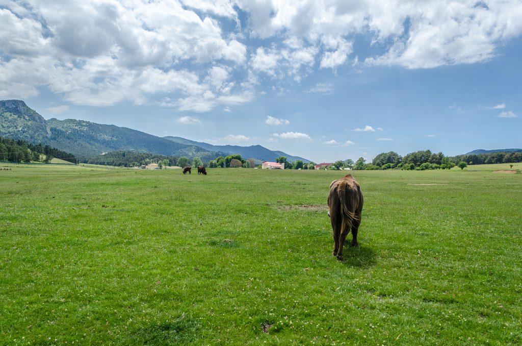 Bisons d'Europe de la réserve des monts d'azur