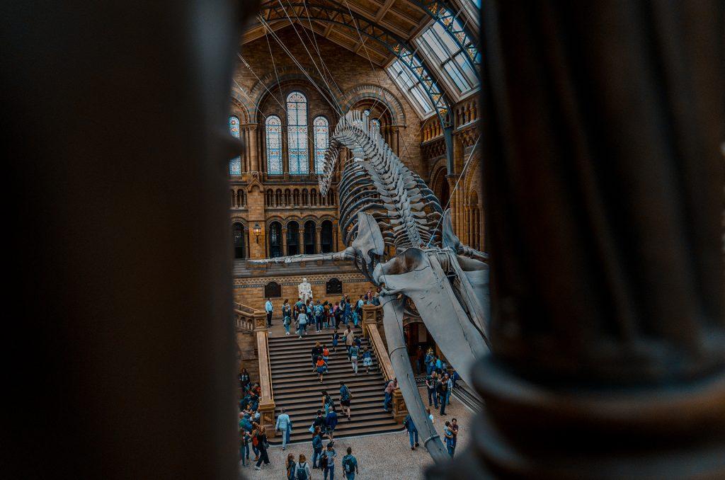 Baleine musée histoire naturel de Londres