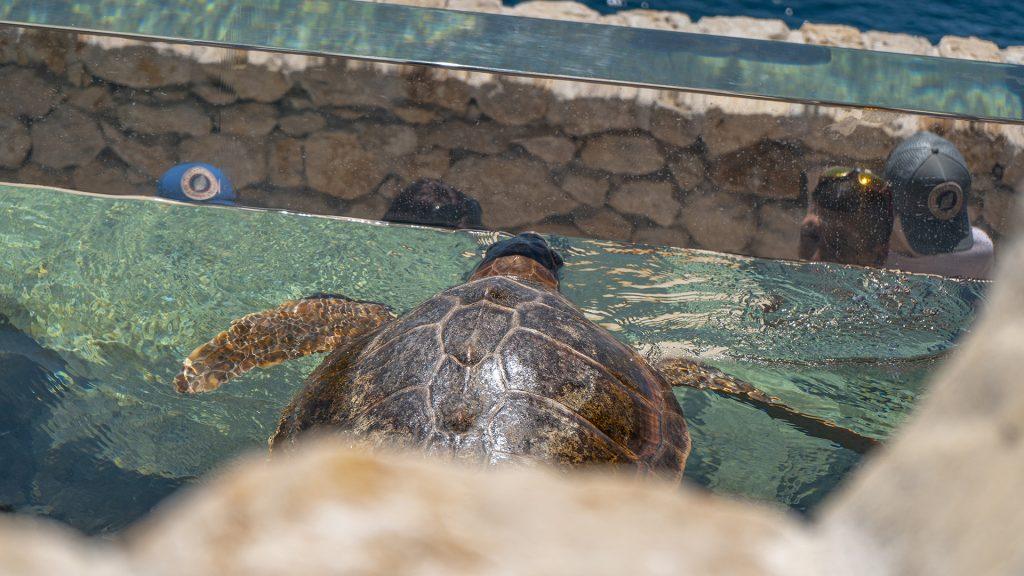 Tortue du musée océanographique